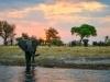 Olifanten tijdens de boottocht